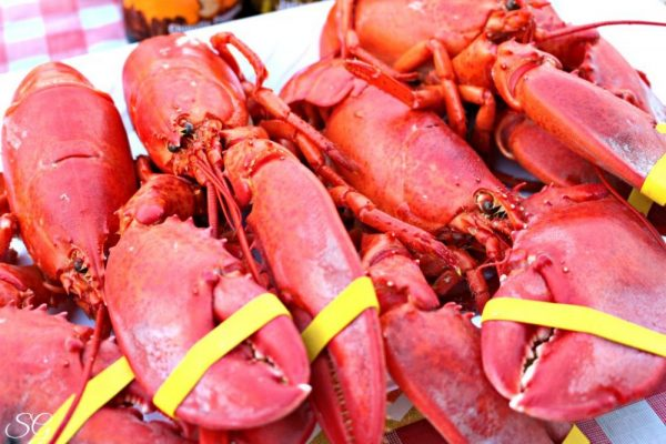 Maine Lobsters, Cooked and Ready to Eat!