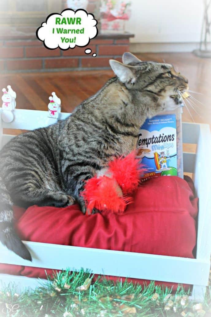 Turbo The Munchkin Cat Bed Tutorial