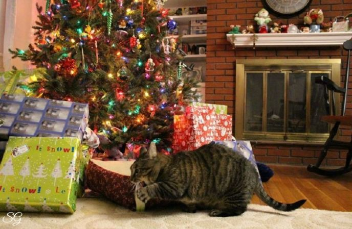 Turbo The Munchkin Cat Loves Chrsitmas
