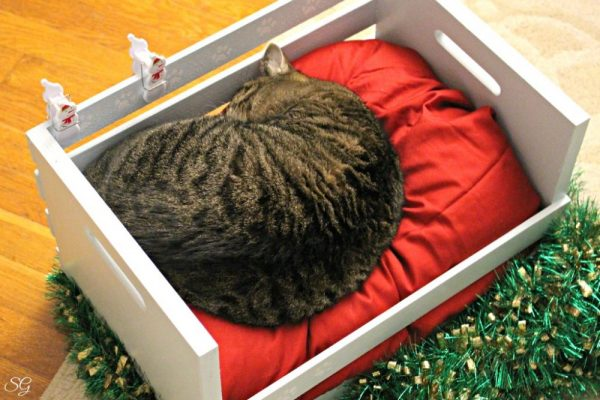 DIY Cat Bed and Turbo The Munchkin Cat