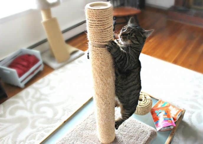 Remove and Replace Sisal on Cat Scratch Post