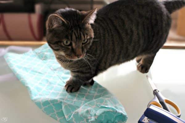 Turbo the Munchkin Cat, Plastic Bag Dispenser