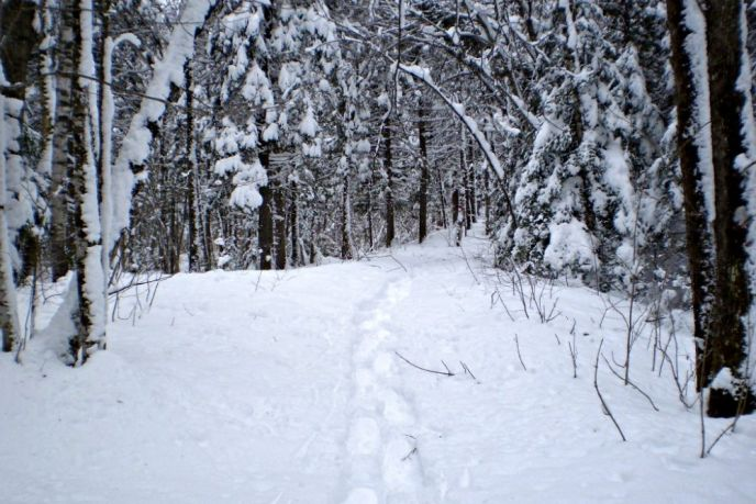 Easy, flat and level snowshoe trail