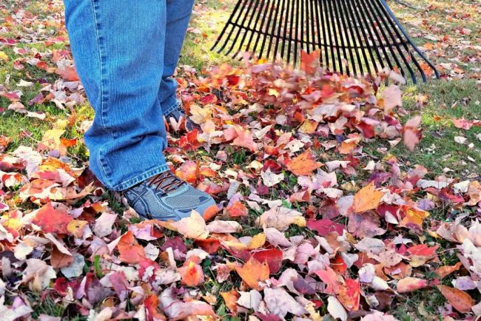 Fall Maintenance Checklist Raking Leaves