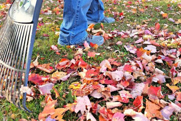 Raking Leaves While Wearing Custom Fit Orthotics