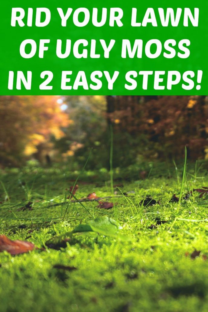 Rid your lawn of moss! Click to find out how you can get rid of the ugly moss in your lawn in just two easy steps! #Lawn #Lawncare #moss #lawns #lawnandgarden #diy #diyprojects #outdoorliving #outdoordiy